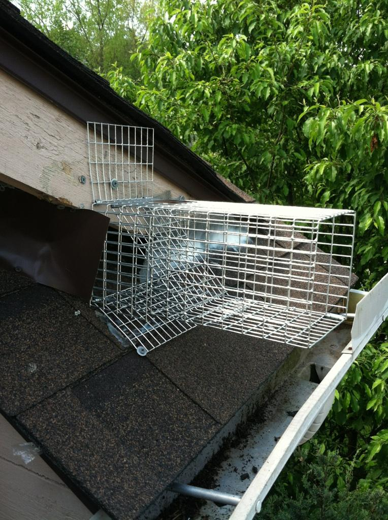 home door way here depot pictured cage doors trap one squirrel